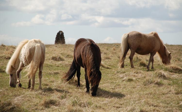 Hästar ser man ofta.