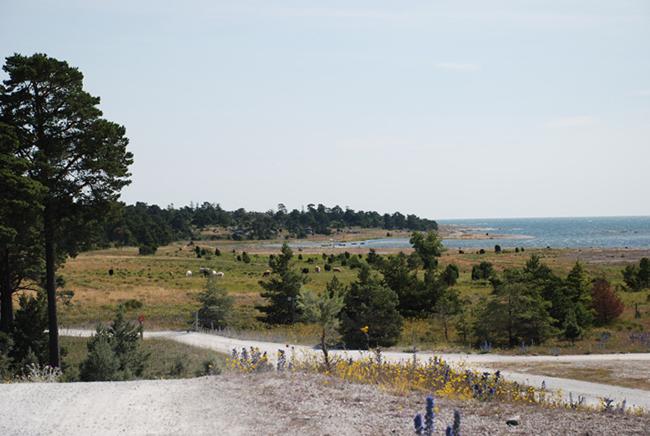 Gotlandsbilder-32-furillen