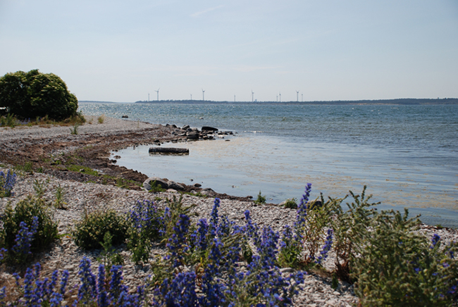 Gotlandsbilder-38-furillen