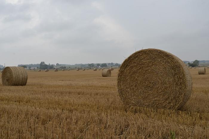 landsbygden-103