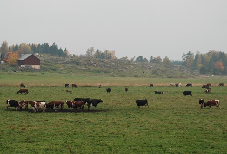 landsbygden-119