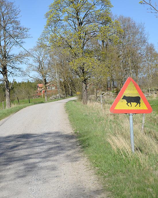 landsbygden-138
