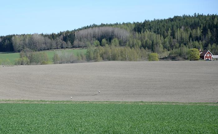 landsbygden-140